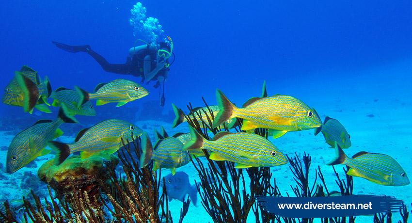🏝 Bucea en estos lugares y disfruta más tu viaje a San Andrés islas